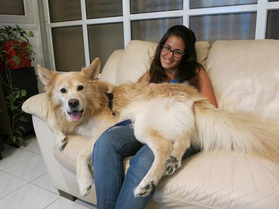 מיתוסים על כלבים