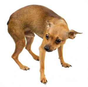 dog-mini-300x297