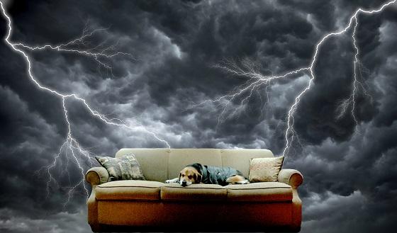 כלב מפחד מרעמים