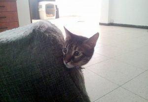 כלבים-ומעבר-דירה_חתולי